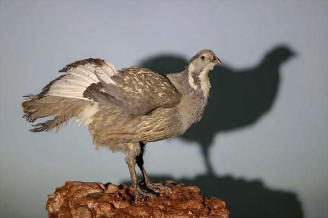 Van'da yaban hayvanları tahnit sanatıyla müzede tanıtılacak - 38