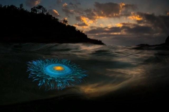 Okyanus Fotoğrafları Yarışması'nın finalistleri belli oldu - 17