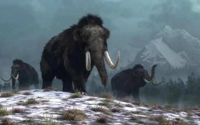 10 bin yıl önce yok olan yünlü mamutlar yeniden doğacak - 7
