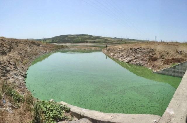 Sazlıbosna Gölü yeşil tabaka ile kaplandı - 3