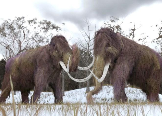 10 bin yıl önce yok olan yünlü mamutlar yeniden doğacak - 6