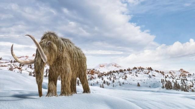 10 bin yıl önce yok olan yünlü mamutlar yeniden doğacak - 9