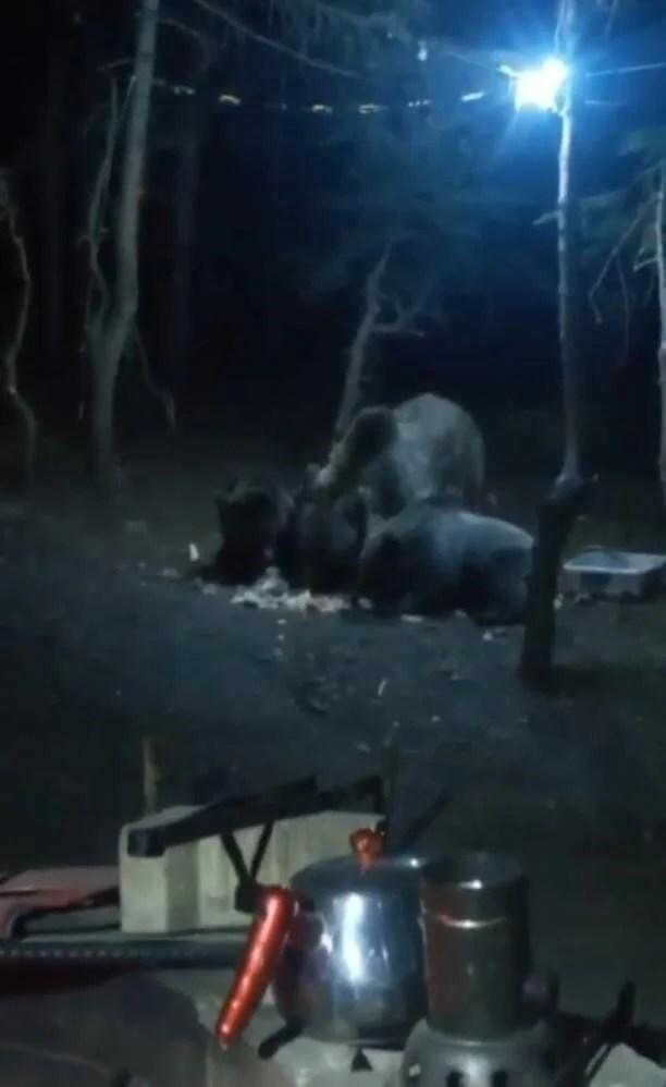 Uludağ'da aç kalan ayılar kamp alanına indi - 2