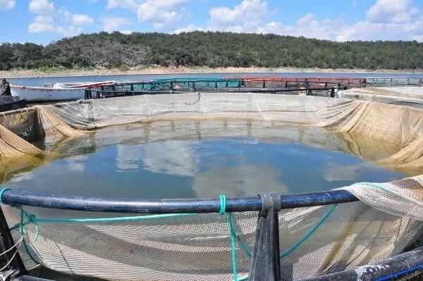 Denizi olmayan Manisa'dan dünyaya balık ihracı - 11