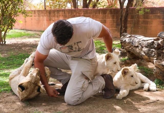 Senegal'de tehlikeli safari turu: Bu kez kafeste insanlar var - 7