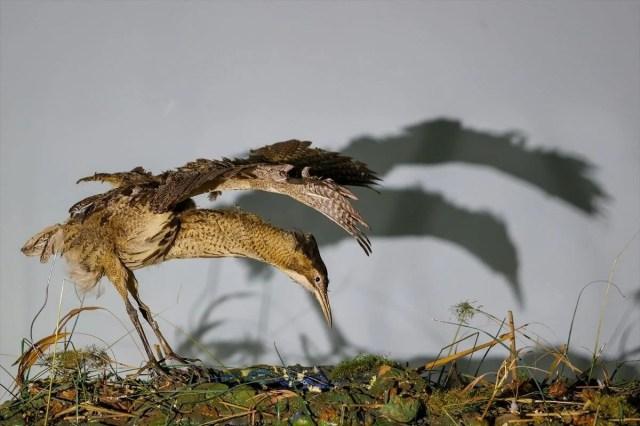 Van'da yaban hayvanları tahnit sanatıyla müzede tanıtılacak - 27