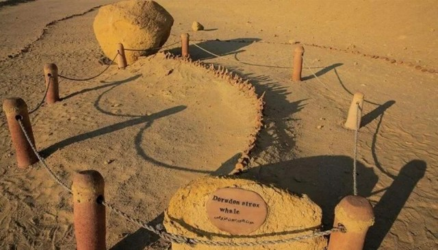 Araştırma: 43 milyon yıllık dört ayaklı balina fosili keşfedildi