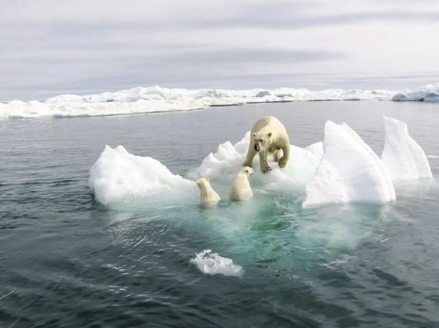 İki bini aşkın bilim insanı uyardı: Küresel ısınmada kritik eşik noktalarını geçtik - 3