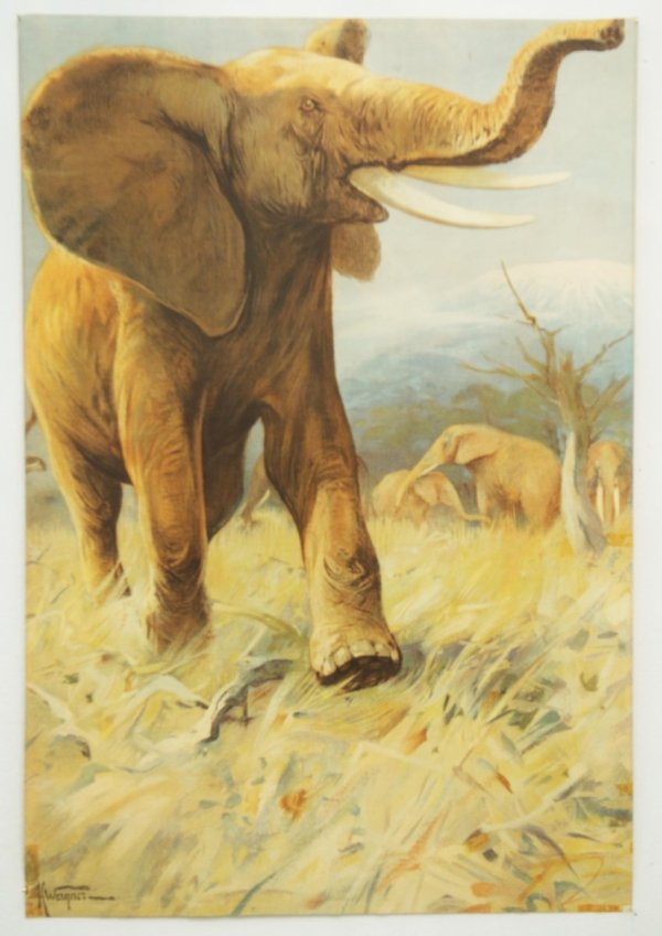 Vintage German School Poster Elephant Pamono