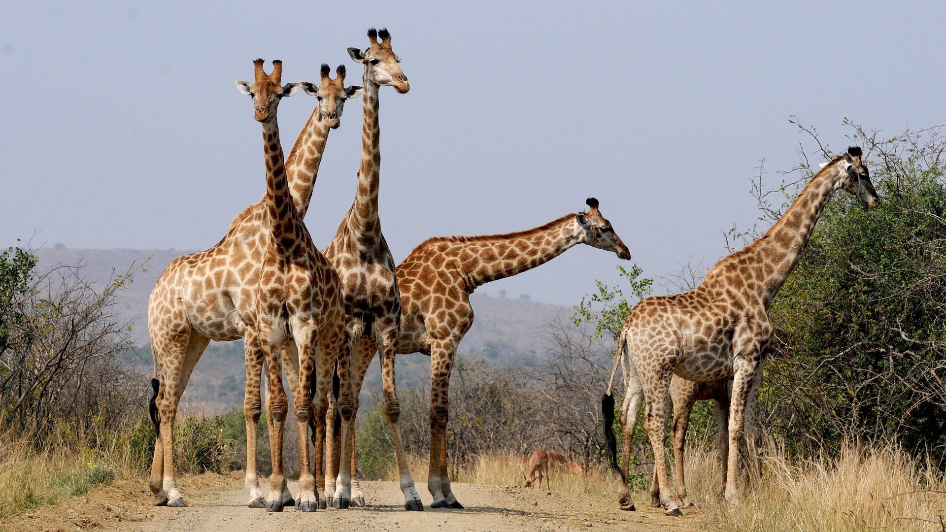 Bijzondere overnachtingen in Grahamstown ZuidAfrika