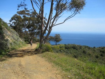 Beautiful eucalyptus-lined vistas greeted us on the first few miles