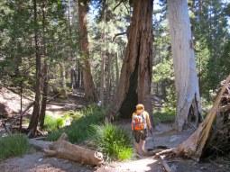Along the Vivian Creek trail