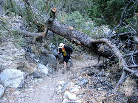 There are a lot of fallen trees along the trail