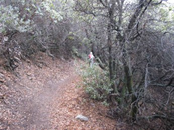 The Holy Jim trail