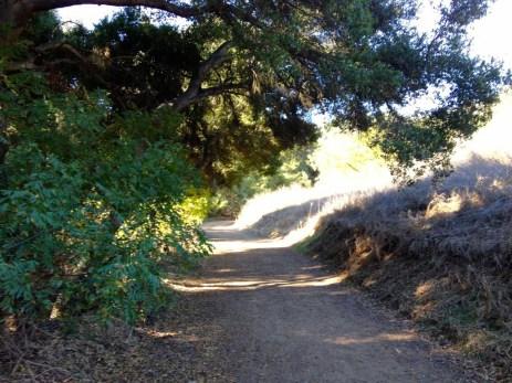 Ancient oak trees line Powder Canyon