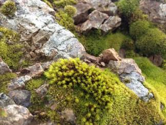 Moss on Bald Mountain