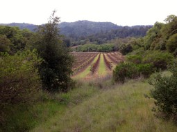 Neighboring vineyards
