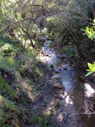 Serene Blackstar Creek