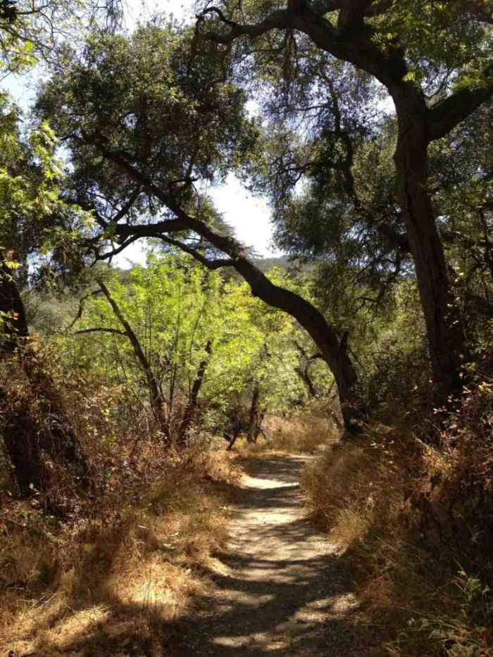 Up Franklin Canyon