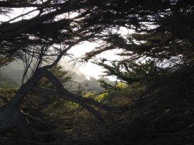 Beach through the Cypress trees