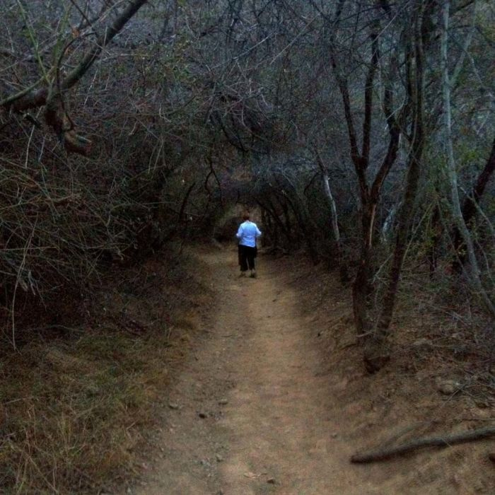 Hiking in a Tunnel of Brush