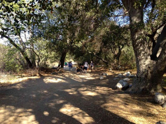 In the shade of Eaton Canyon