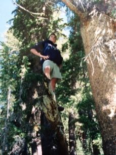 Joel up a tree