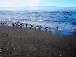 Birds Facing North