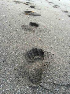Bare Tracks