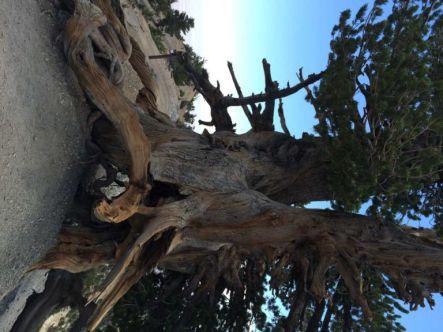 The Wally Waldron Tree