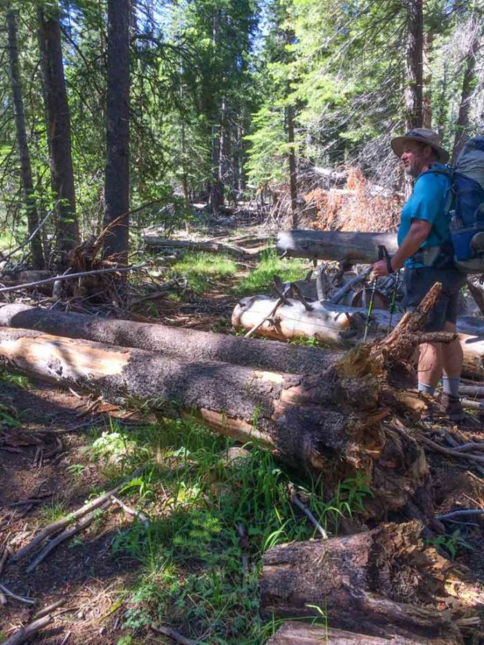 There were about 16 downed trees on this section of trail