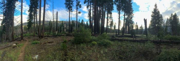 We climbed up through an area scarred by a past wildfire