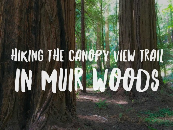 Hiking the Canopy View Trail in Muir Woods