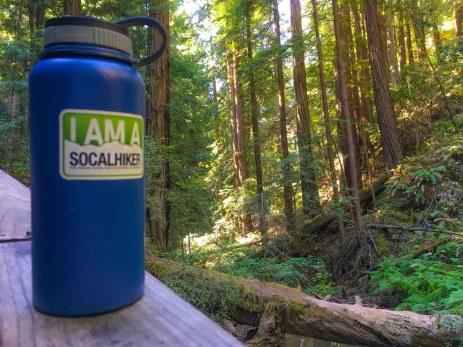 SoCalHiker in Muir Woods