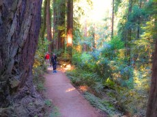 The Canopy View Trail in Muir Woods