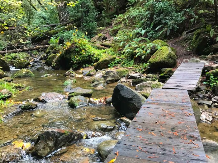 This bridge is removed when Waddell Creek swells in winter storms