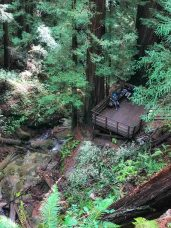 Looking down on the deck from the trail near the top of Berry Creek Falls