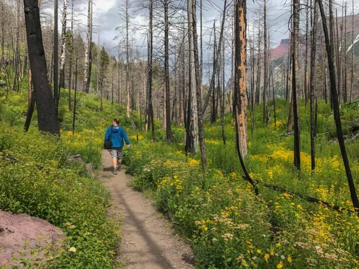 Wildflowers bloom where trees burned