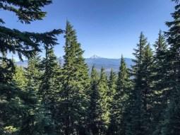 The Cascades peeking above the trees