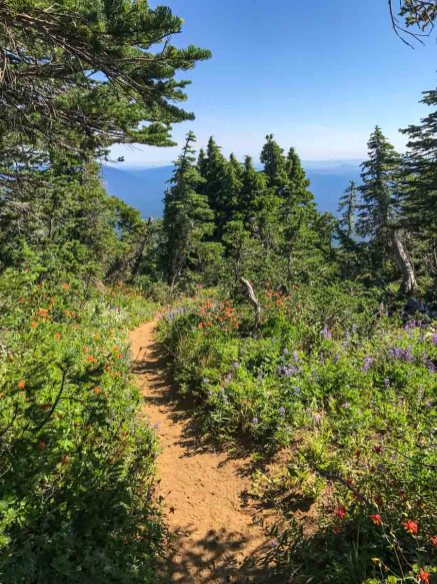 Plentiful wildflowers on Black Crater