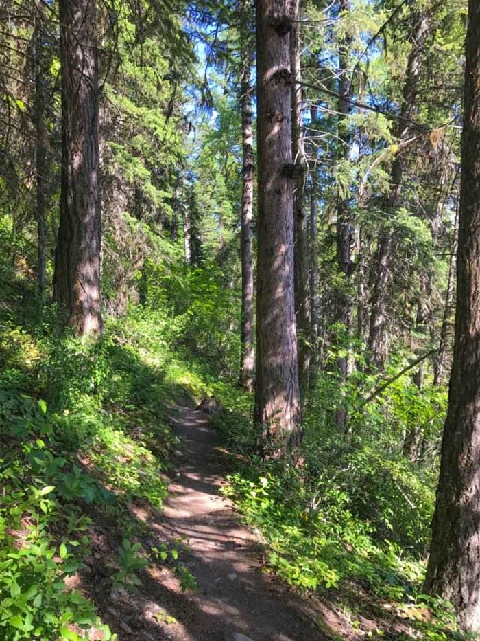 Trail into the woods along Kintla Lake