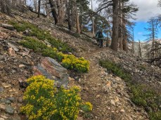 Most of the San Bernardino Divide Trail is pretty desolate and rocky, but wildflowers to spring up, even in September.
