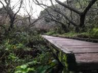 A bridge on the Dipsea Trail