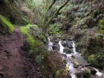 Cascades alongside the Steep Ravine Trail