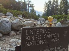 Earless Yoda at the Northern Boundary of Kings Canyon NP