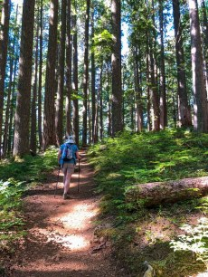 Just a walk in the woods on Mt Ellinor