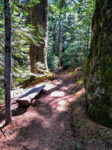 One of the many benches on the Mt Ellinor Trail