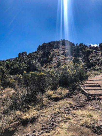 The Heather-Moorland Zone on Kilimanjaro