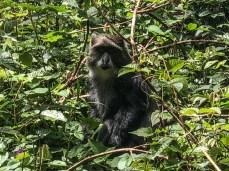Primates in the Rain Forest