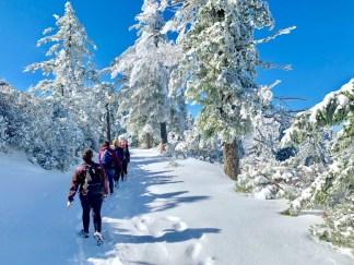 Winter wonderland on Mount Saint Helena